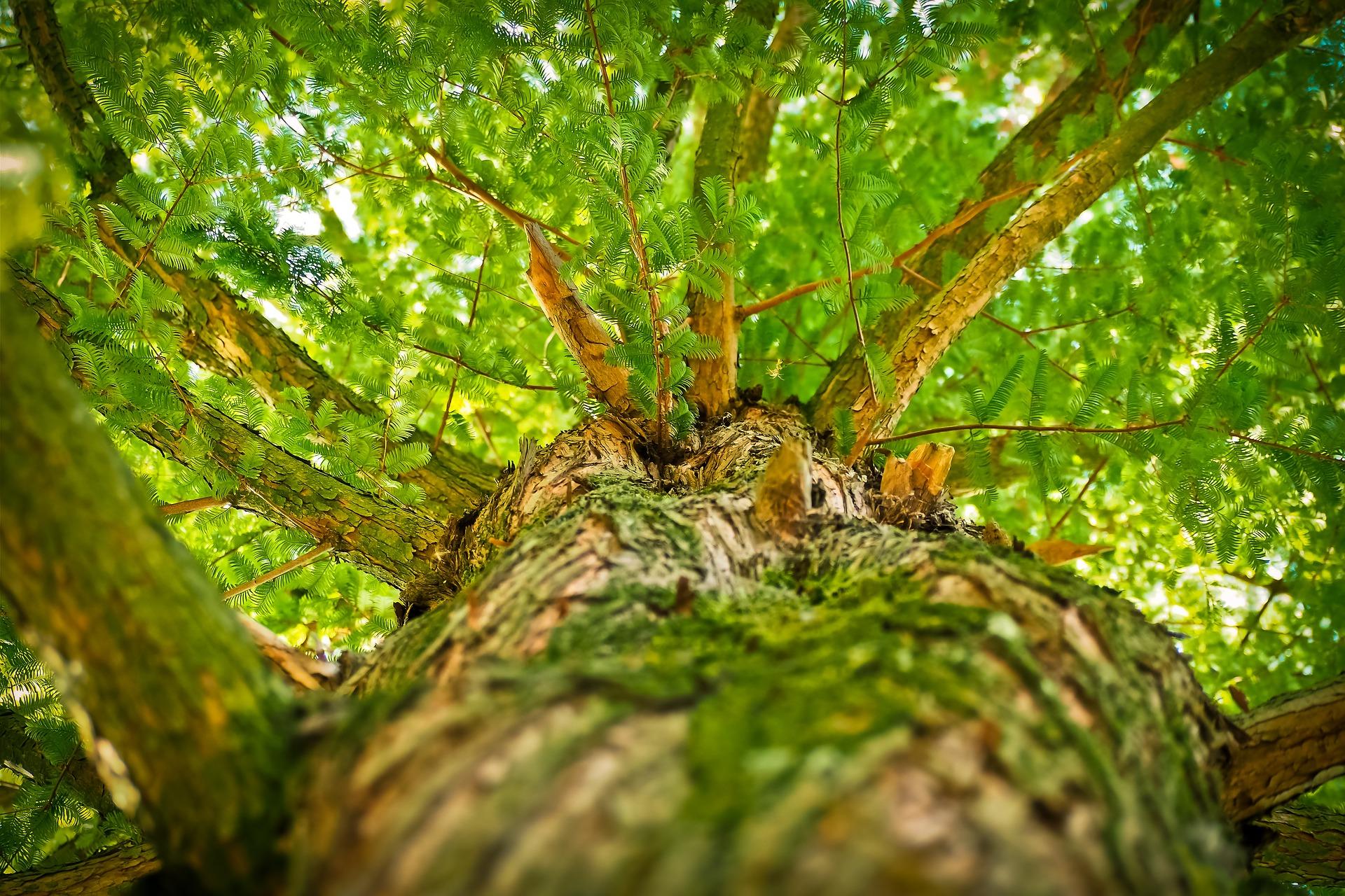 Nuove tendenze la natura entra nell arredamento per for Nuove tendenze arredamento